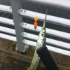 サヨリ釣りの餌