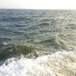 波の中のサヨリ