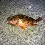 夜のヘチ釣り、クロダイに挑戦
