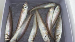 3連休の釣行
