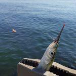 釣り場を開拓する