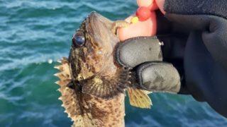 初釣りも根魚